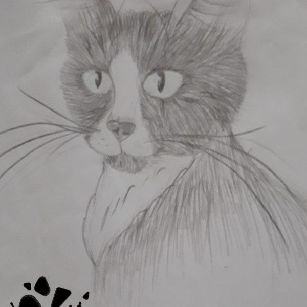 Le chat de Loumia, par Loumia